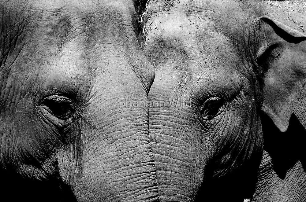 Elephant Mirror by Shannon Wild