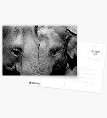 Elephant Mirror Postcards