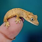 BABY GECKO by CRYROLFE
