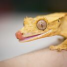 Gecko Lick by CRYROLFE