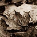 Fallen Leaves  by Lynn Gedeon