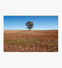 One tree alone Photographic Print