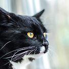 Window Cat von MMPhotographyUK