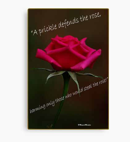 PRICKLY ROSES Canvas Print