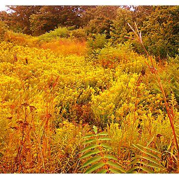 flower field by Alexander589