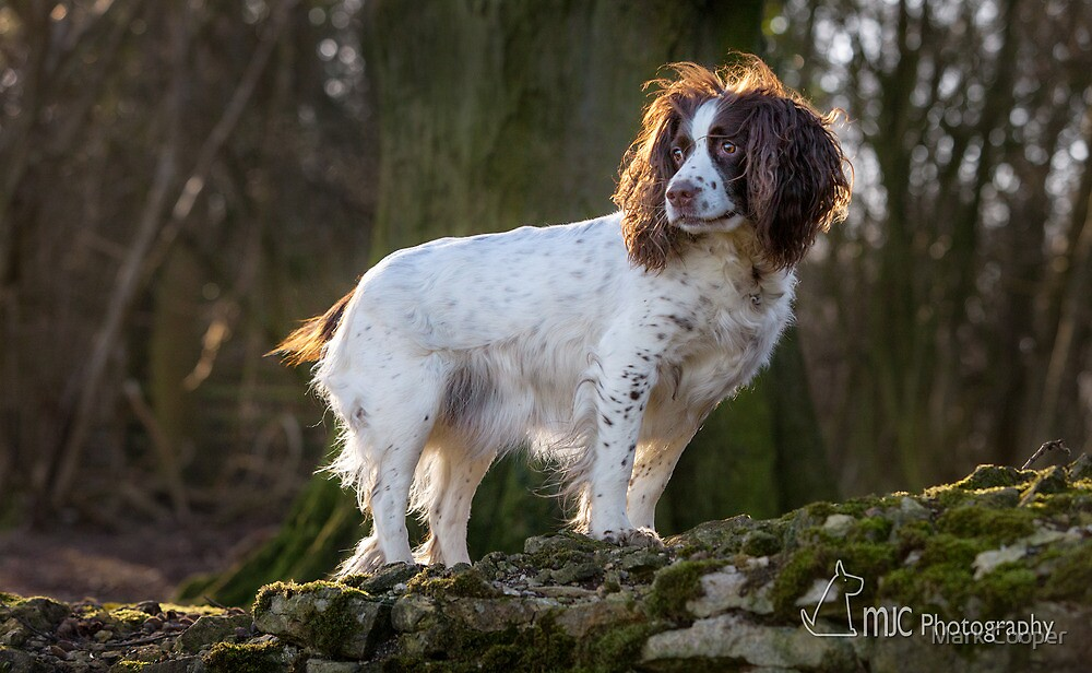 The Look with added Sunlight by Mark Cooper