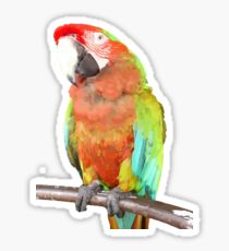 Vector Style Harlequin Macaw On A Perch Sticker