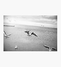 Flying Photographic Print