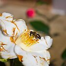 Pollination - we're lost without it! by MisterD