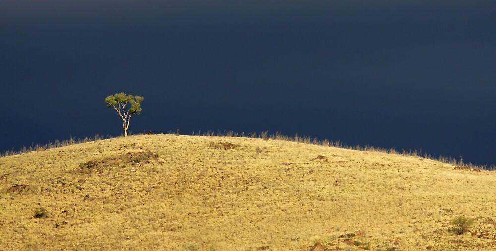 Sturt National Park by Rob Drummond