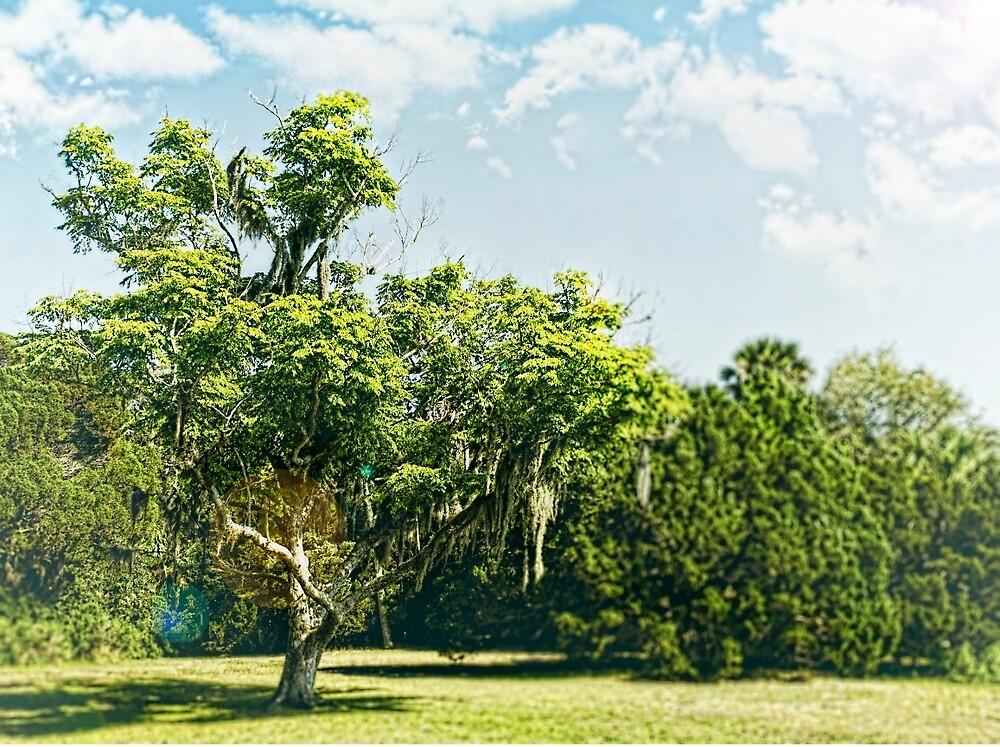 The Happy Tree by AdomexPhoto