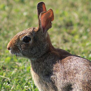 Rabbit by brightmanite