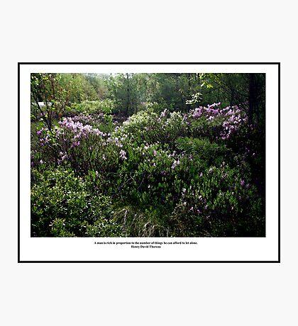 Sunlight on Laurels - Thoreau Quote Poster - A Rich Man Photographic Print
