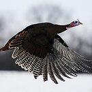 turkey taken off by George  Close