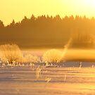 Golden morning  by Remo Savisaar