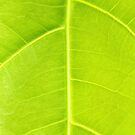 Green leaf close up nature background by kawing921