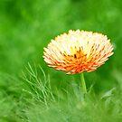 Orange spring flower by kawing921