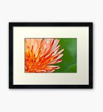 Orange flower petals, close-up shot. Framed Print
