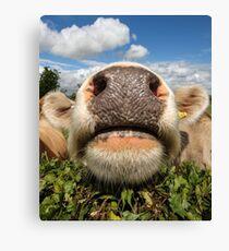 Funny, Amusing, Cow, Portrait Canvas Print