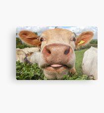 Cow, Funny, Amusing, Portrait Metal Print