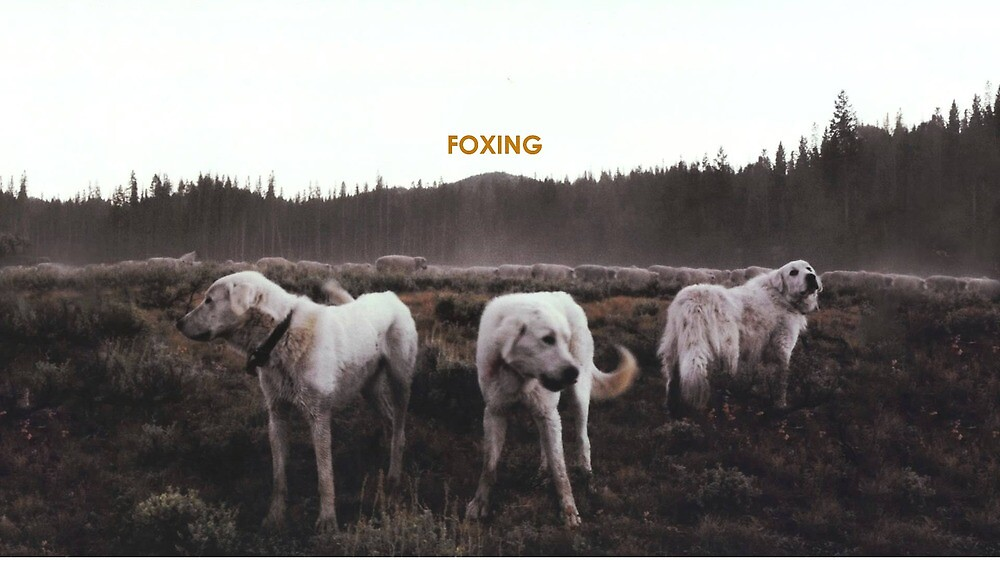 FOXING- album artwork by JessicaPippi