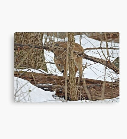 The Doe And The Snow - Odocoileus virginianus Canvas Print
