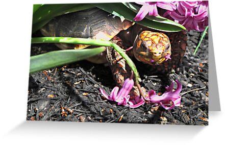 Mischievous Tortoise by kerperfection