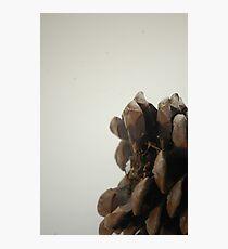 Pinecone photography Photographic Print