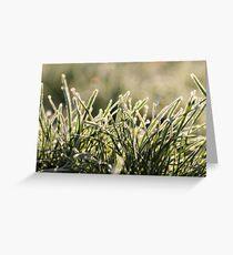 Frozen Grass Greeting Card