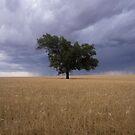 Lone Tree by Darren Wright