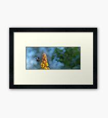 Abejorro Bee Framed Print