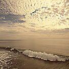 SEA by Laura E  Shafer