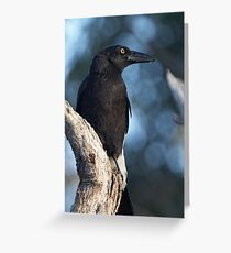 Pied Currawong  Greeting Card