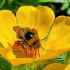Now Which is the Pollen !! by AnnDixon