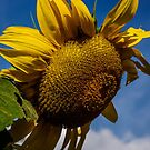 A Ray of Sunshine by Larry Llewellyn