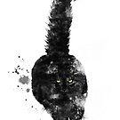 Schwarze Maine Coon Katze von Marlene Watson