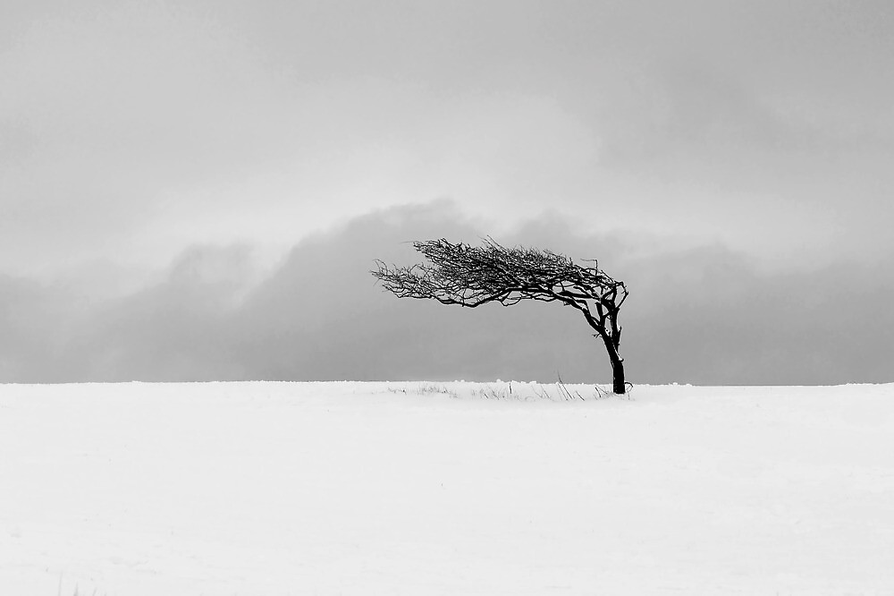 Winter Tree by fernblacker