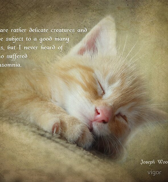 Ode to a sleepy cat by vigor
