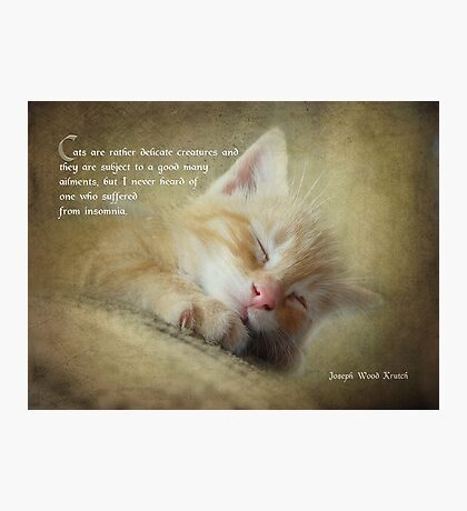 Ode to a sleepy cat Photographic Print