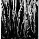 Treem by Leif Prime