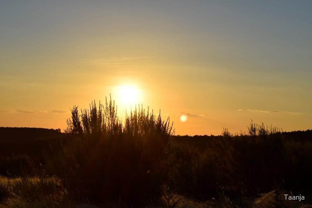 Australian Christmas Sunset  by Taanja