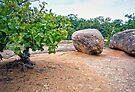 Elephant Rocks State Park  by FrankieCat
