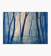 Nel bosco Photographic Print