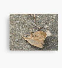 Crane Fly Canvas Print