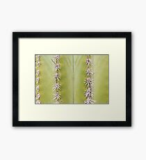 Green Cactus closeup - nature macro Framed Print