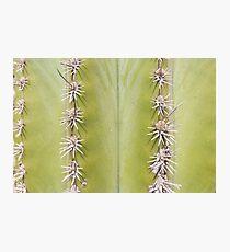 Green Cactus closeup - nature macro Photographic Print