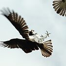 Dualing Osprey by Mike Fischetti