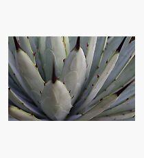 Agave Thorns -Cactus Macro, Natural Pattern h Photographic Print