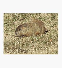 Groundhog days Photographic Print