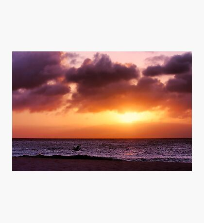 A Pelican's Sunset Photographic Print
